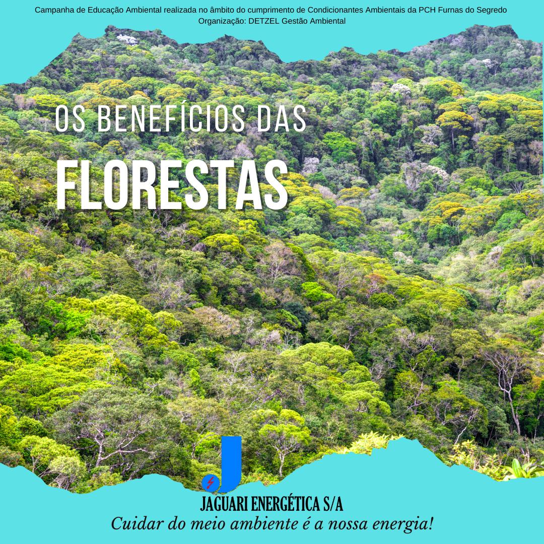 Notícia sobre Os benefícios das Florestas